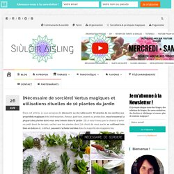 [Nécessaire de sorcière] Vertus magiques et utilisations rituelles de 10 plantes du jardin – Siùlòir Aisling