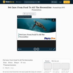 Pet Care: From Food To All The Necessities