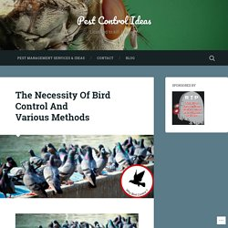 The Necessity Of Bird Control And Various Methods – Pest Control Ideas