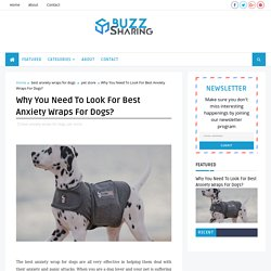 Why You Need To Look For Best Anxiety Wraps For Dogs?