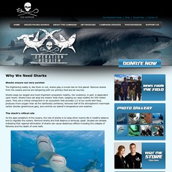 Why We Need Sharks - Operation Requiem