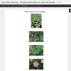 Plantes comestibles et utiles du Québec: Malva neglecta / Mauve négligée