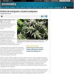 Cultivo de mariguana, no para cualquiera