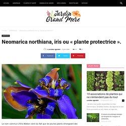 Neomarica northiana, iris ou « plante protectrice ».