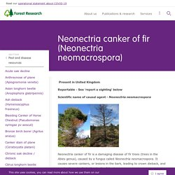 FOREST RESEARCH - 2020 - Neonectria canker of fir (Neonectria neomacrospora)