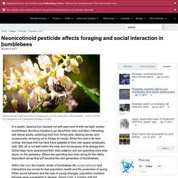 PHYSORG 09/01/17 Neonicotinoid pesticide affects foraging and social interaction in bumblebees