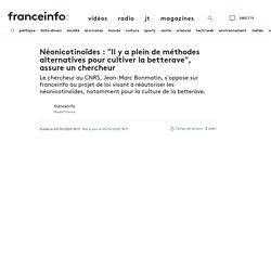 """Néonicotinoïdes : """"Il y a plein de méthodes alternatives pour cultiver la betterave"""", assure un chercheur"""