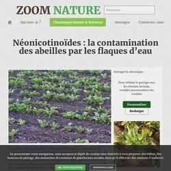 Néonicotinoïdes : la contamination des abeilles par les flaques d'eau