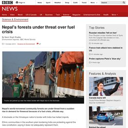 Nepal's forests under threat over fuel crisis - BBC News