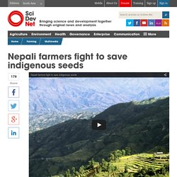 Nepali farmers fight to save indigenous seeds - SciDev.Net South Asia