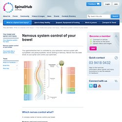 Nervous System Control Of Your Bowel - SpinalHub