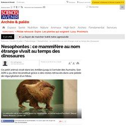 Nesophontes : ce mammifère au nom étrange vivait au temps des dinosaures