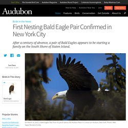 First Nesting Bald Eagle Pair Confirmed in New York City
