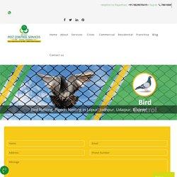 Pigeon Netting in Ajmer