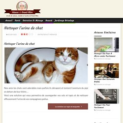 Nettoyer l'urine de chat