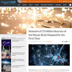 Network of 75 Million Neurons of the Mouse Brain Mapped for the First Time
