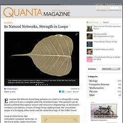 In Natural Networks, Strength in Loops