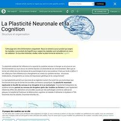 Plasticité du cerveau, cognition, neurogénèse