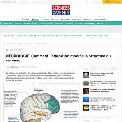 NEUROLOGIE. Comment l'éducation modifie la structure du cerveau - Sciencesetavenir.fr