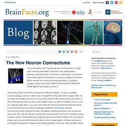The New Neuron Connectome