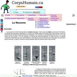 Le Neurone- cellule fondamentale du système nerveux.