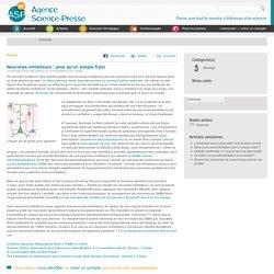 Neurones inhibiteurs : plus qu'un simple frein