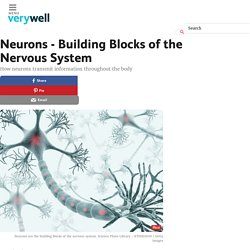 Neurons - Building Blocks of the Nervous System
