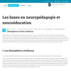 Les bases en neuropédagogie et neuroéducation