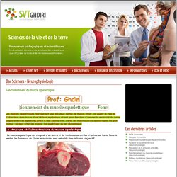 Bac Sciences Neurophysiologie Fonctionnement du muscle squelettique