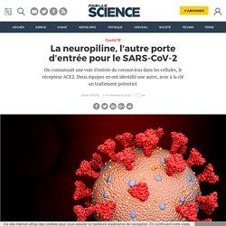 La neuropiline, l'autre porte d'entrée pour le SARS-CoV-2