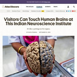 Visitors Can Touch Human Brains at This Indian Neuroscience Institute