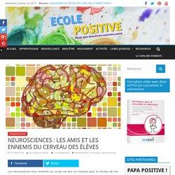 NEUROSCIENCES : LES AMIS ET LES ENNEMIS DU CERVEAU DES ÉLÈVES - Ecole Positive
