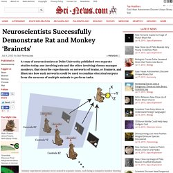 Neuroscientists Successfully Demonstrate Rat and Monkey 'Brainets'