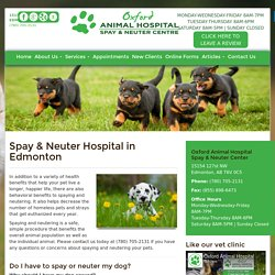 Dog & Cat Spay and Neuter Clinic in Edmonton