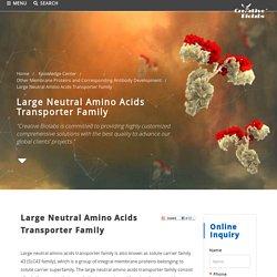 Large Neutral Amino Acids Transporter Family