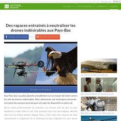 Des rapaces entrainés à neutraliser les drones indésirables aux Pays-Bas