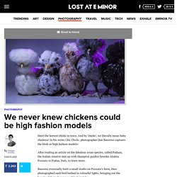 We never knew chickens could be high fashion models