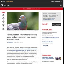 Newfound brain structure explains why some birds are so smart—and maybe even self-aware