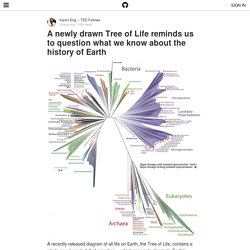 A Newly Drawn Tree of Life Reminds Us to Question What We Know About the History of Earth