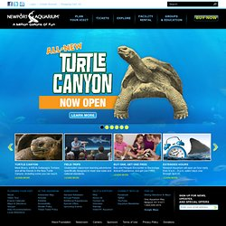 Newport Aquarium | Newport Attractions | Things To Do Cincinnati
