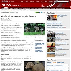 Wolf makes a comeback in France
