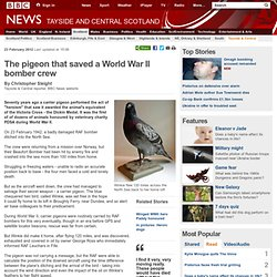 The pigeon that saved a World War II bomber crew