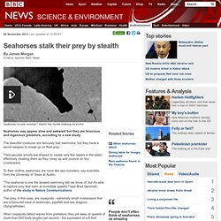 Seahorses stalk their prey by stealth