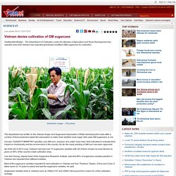 VIETNAMNET 23/01/16 Vietnam denies cultivation of GM sugarcane