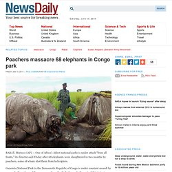 Poachers massacre 68 elephants in Congo park