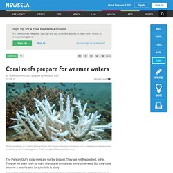 Coral reefs prepare for warmer waters