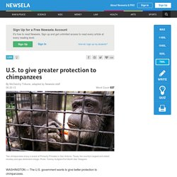 U.S. to give greater protection to chimpanzees