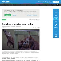 Apes have rights too, court rules