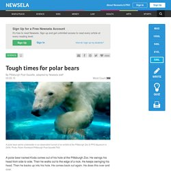 Tough times for polar bears