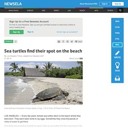 Sea turtles find their spot on the beach